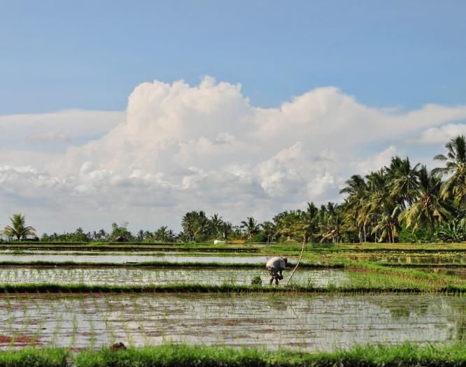 Villa Visesa Ubud Bali Rice Paddy View